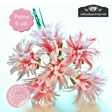 Flor Aster rosa hebritas pomo de 6ud